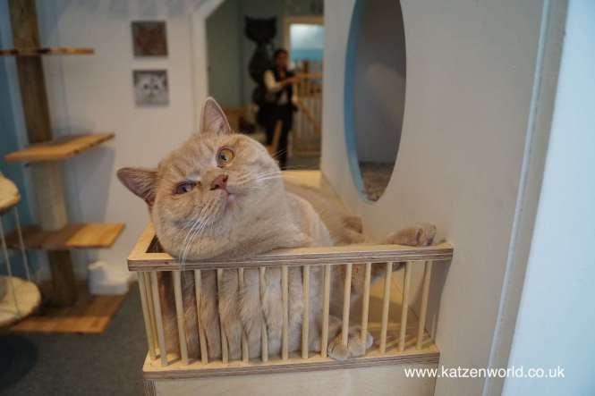KatzenWorld's entry